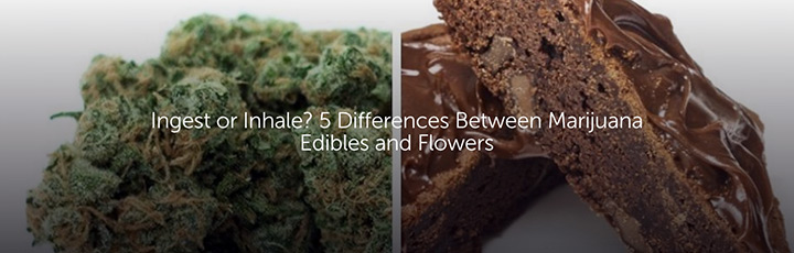 Ingest or Inhale? 5 Differences Between Marijuana Edibles and Flowers