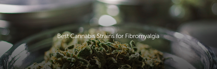 Best Cannabis Strains for Fibromyalgia