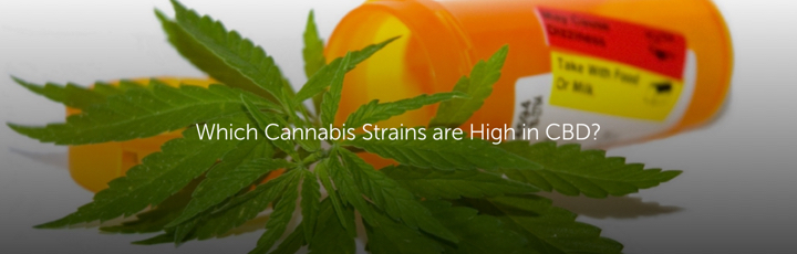 Which Cannabis Strains are High in CBD?