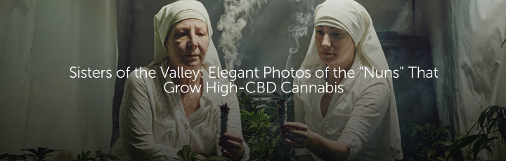 "Sisters of the Valley: Elegant Photos of the ""Nuns"" That Grow High-CBD Cannabis"