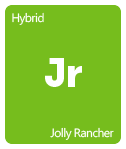 Leafly Jolly Rancher cannabis strain tile