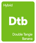 Leafly Double Tangie Banana cannabis strain tile