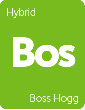 Leafly Boss Hogg cannabis strain tile