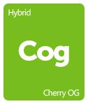 Leafly Cherry OG cannabis strain tile