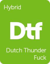 Leafly Dutch Thunder Fuck cannabis strain tile