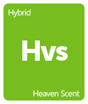Leafly Heaven Scent cannabis strain tile