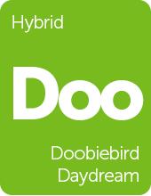 Leafly Doobiebird Daydream hybrid cannabis strain tile