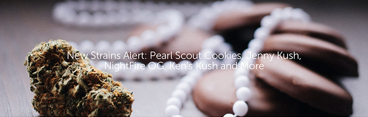 New Strains Alert: Pearl Scout Cookies, Jenny Kush, NightFire OG, Ken's Kush and More