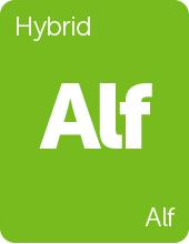 Leafly Alf cannabis strain tile