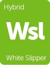 Leafly White Slipper cannabis strain tile