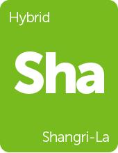 Leafly Shangri-La cannabis strain tile