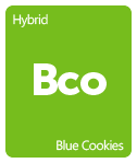 Leafly Blue Cookies cannabis strain tile
