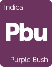 Leafly Purple Bush cannabis strain tile