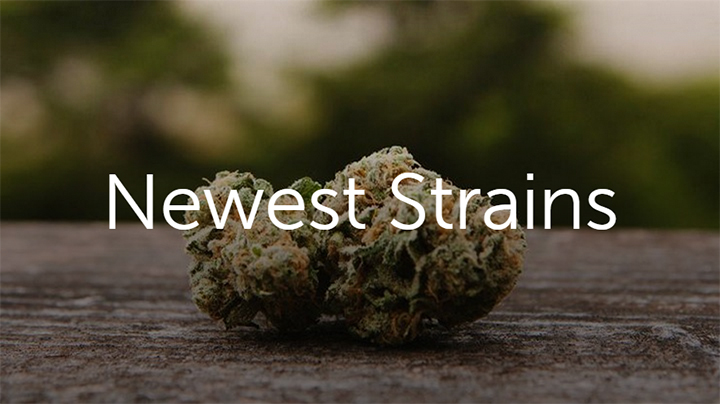 Newest cannabis strains