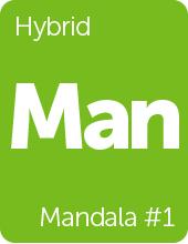 Leafly Mandala #1 cannabis strain tile