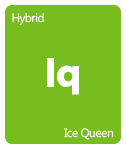 Leafly Ice Queen cannabis strain tile