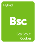 Leafly Boy Scout Cookies cannabis strain tile