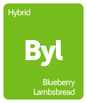 Leafly blueberry lambsbread cannabis strain tile