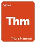 Leafly thor's hammer cannabis strain tile