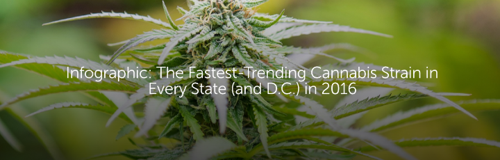 Infographic: The Fastest-Trending Cannabis Strain in Every State (and D.C.) in 2016