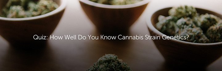 Quiz: How Well Do You Know Cannabis Strain Genetics?