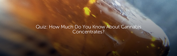 Quiz: How Much Do You Know About Cannabis Concentrates?
