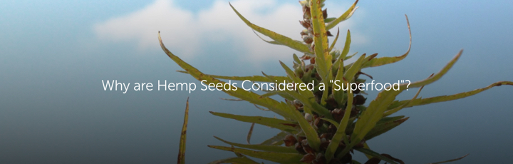 "Why are Hemp Seeds Considered a ""Superfood""?"