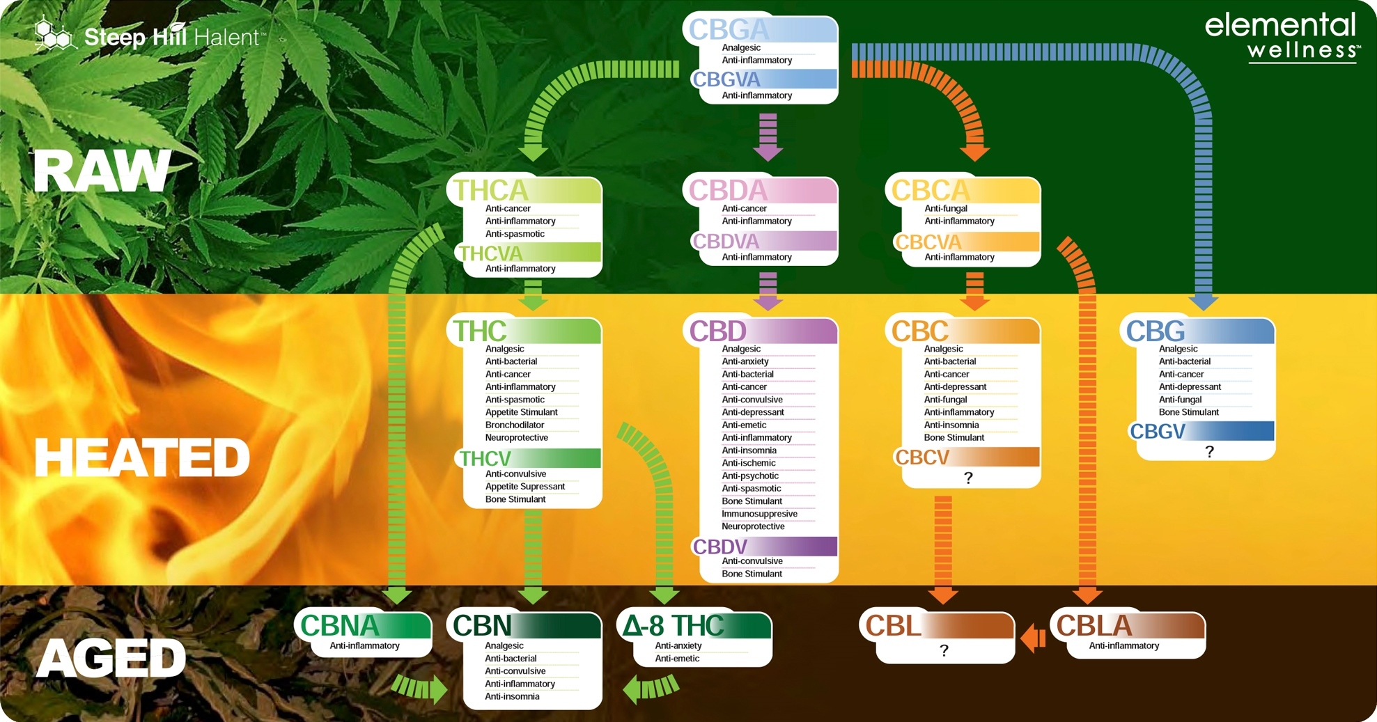 A chart detailing the three forms of cannabis: raw, heated, and aged