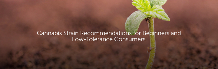 Cannabis Strain Recommendations for Beginners and Low-Tolerance Consumers