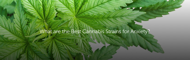 What are the Best Cannabis Strains for Anxiety?
