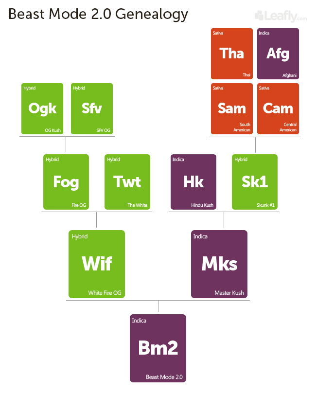 Beast Mode 2.0 family tree