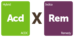 Leafly ACDC x Remedy cannabis strain tiles