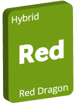 Leafly Red Dragon cannabis strain tile