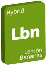 Leafly Lemon Bananas cannabis strain tile