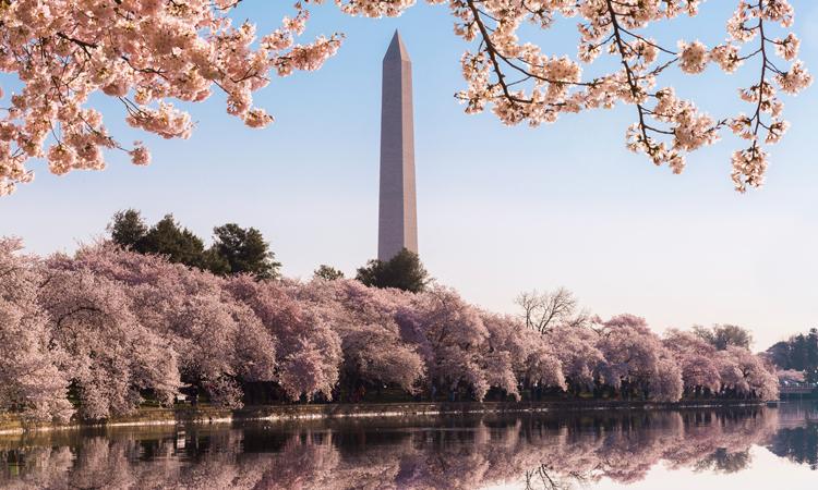The Washington Monument at Tidal Basin in Washington, D.C.