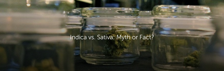 Indica vs. Sativa: Myth or Fact?