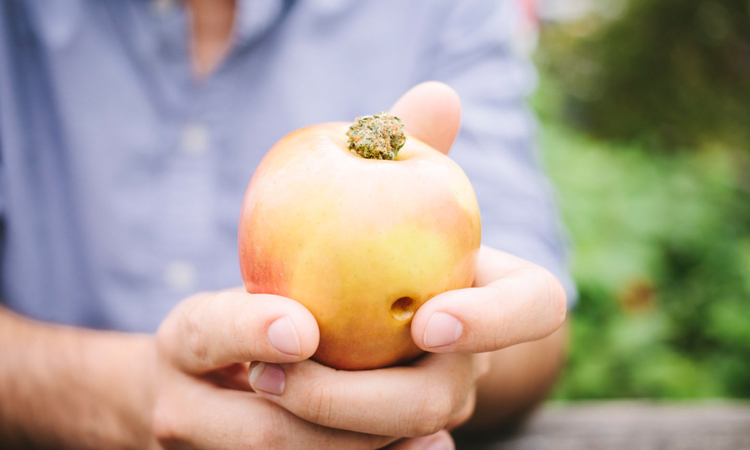 An apple pipe, one of many homemade devices for smoking cannabis