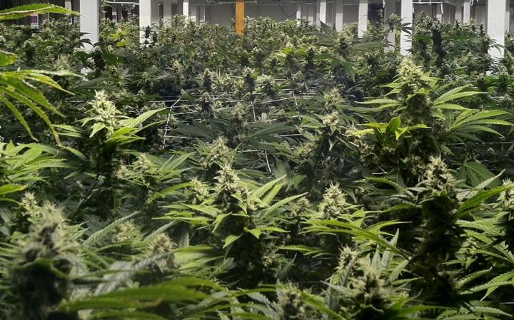 L'Eagle recreational marijuana dispensary in Denver, Colorado