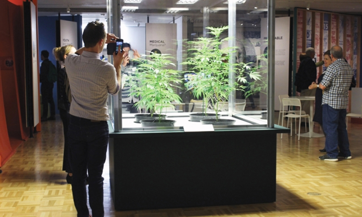 Cannabis display at Oakland Museum of California