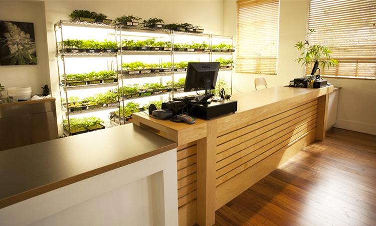 Harborside Health Center medical cannabis dispensary in Oakland, California