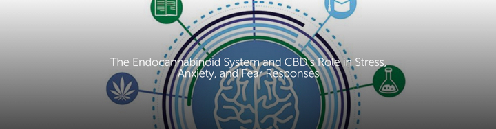 The Endocannabinoid System and CBD's Role in Stress, Anxiety and Fear Responses