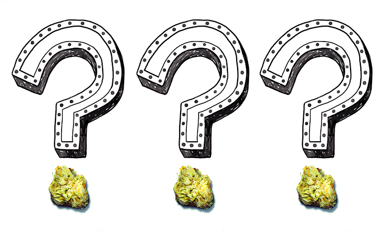 cannabis questions