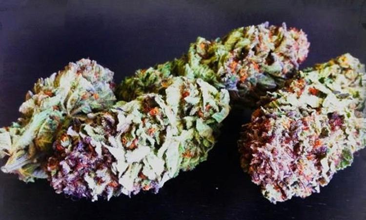 fat cannabis buds