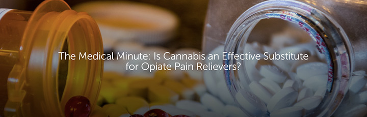 The Medical Minute: Is Cannabis an Effective Substitute for Opiate Pain Relievers?