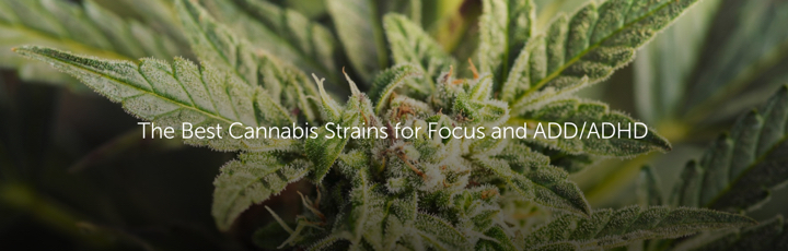 The Best Cannabis Strains for Focus and ADD/ADHD