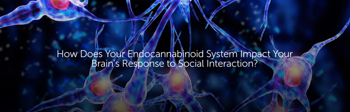 How Does Your Endocannabinoid System Impact Your Brain's Response to Social Interaction?