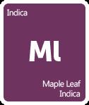 Leafly Maple Leaf Indica cannabis strain tile