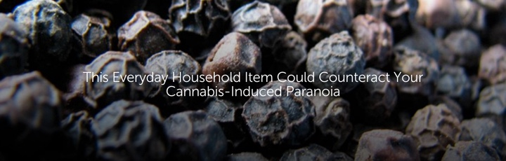 This Everyday Household Item Could Counteract Your Cannabis-Induced Paranoia