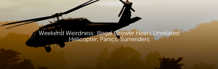 Weekend Weirdness: Illegal Grower Hears Unrelated Helicopter, Panics, Surrenders
