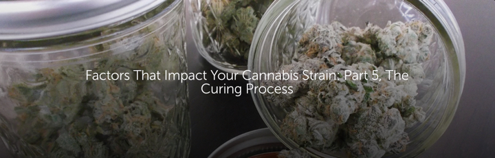 Factors That Impact Your Cannabis Strain: Part 5, The Curing Process